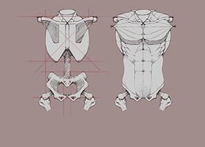 骨骼与肌肉