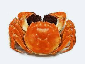 设计师写实绘画案例教程:螃蟹的画法