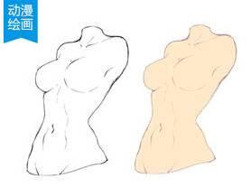 人体躯干(胸部,臀部)、四肢的画法