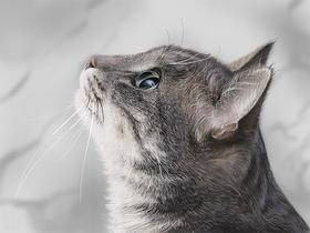 设计师写实绘画案例教程:猫咪的画法
