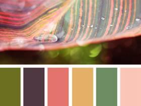 【图片取色配色法】从电影画面中取色