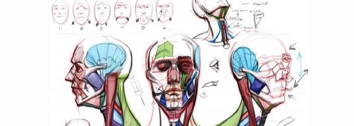 人物头部结构分析素材及人体结构绘制技巧