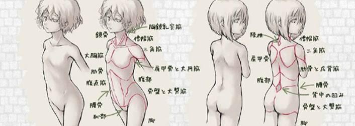 动漫人物基础之躯体篇